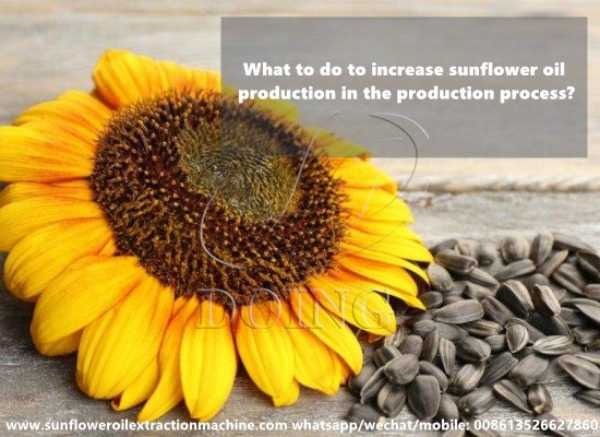 What to do to increase sunflower oil production in the production process?